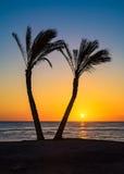 Sunrset bland palmträd Royaltyfri Bild
