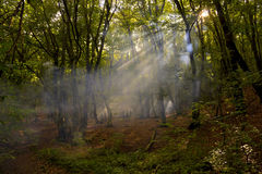 The suns rays in the dense forest Royalty Free Stock Image