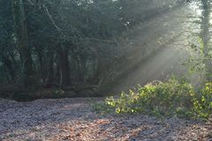 Early morning sunshine on a frosty day on Southampton Common stock photo