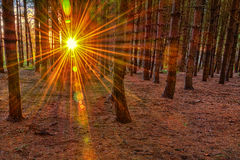 Suns rays in forest Stock Photo