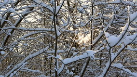 Suns rays make their way through the beautiful snowcapped tree branches in winter park. Horizontal panorama stock video