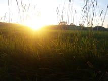 Suns rising again. Suns rising in green Stock Photos