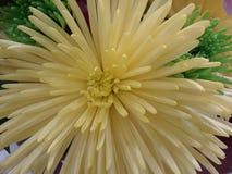 Sunsburst Imágenes de archivo libres de regalías