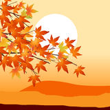 Sunset 08. Red green leafs , Autumn is come Stock Images