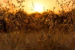 Sunset1 Royaltyfria Bilder