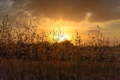 Sunset4 arkivfoton
