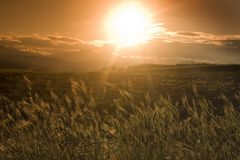Sunset. A sunset viewed from a wheat field Stock Images