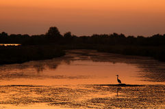 Sunset. Bird and sunset in Danube Delta, Romania Royalty Free Stock Photography