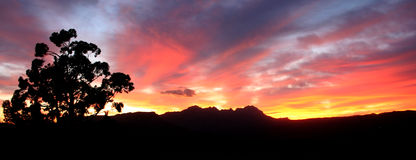 Sunset. Evening sky with the silhouette of a tree and a mountain range Royalty Free Stock Image
