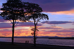 Sunset. Bight sunset afterglow tree tour Stock Image