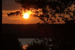 Sunset. In pine forest above the lake Royalty Free Stock Photo