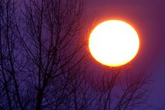 Sunset. A sunset behind a tree branch Stock Photography