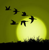 Sunset. Landscape in sunset with silhouette birds Royalty Free Stock Image