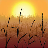 Sunset. Sun is getting down over grass Stock Image