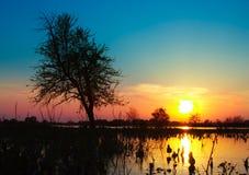 Sunset. Silhouette of tree on sunset Stock Photos