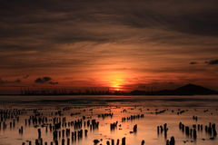 Sunset. The sunset in the oyster farm Stock Photography