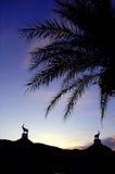 Sunset. At chiang mai night safari Stock Photo