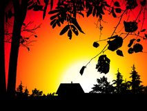 Sunset. Tree silhouettes, vector illustration Royalty Free Stock Image