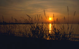 Sunset. With Grass In Foreground Royalty Free Stock Photography