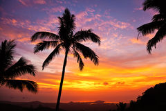 Sunset. Palm trees on the background of a beautiful sunset Stock Photo