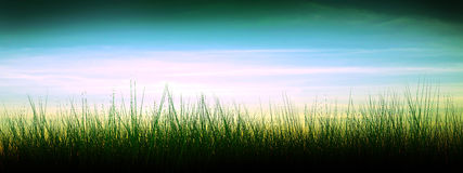 Sunset. Silhouette of a grass against Stock Images