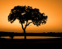 Sunset. Tree & pond against Orange sky Royalty Free Stock Photography
