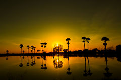 Sunset. And the reflection of trees in Thailand Stock Images