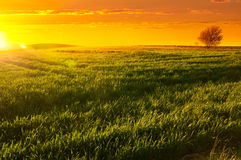 Sunset. Springtime with the sun setting over grass, Barossa Valley Stock Photography