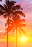 Sunset. Two palm and beautiful sunset Royalty Free Stock Photos