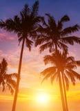 Sunset. Four palm and beautiful sunset Royalty Free Stock Photos