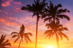 Sunset. Five palms and beautiful sunset Stock Photos