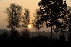 Sunset. Between the trees, Netherlands Royalty Free Stock Photo