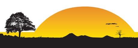 Sunset. Tree at sunset. Vector illustration Stock Image