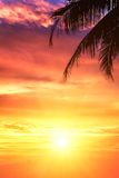 Sunset. Branch of palm trees and a beautiful sunset Royalty Free Stock Images