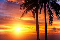 Sunset. Two palms and beautiful sunset Royalty Free Stock Images