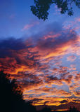 Sunset A 3-07. Beautiful soft orange, red, and pink clouds drift in a rich blue sky framed by silhouetted trees Stock Image