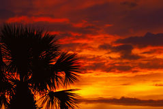 Sunset. A beautiful fire red sunset in Florida with palm tree stock images
