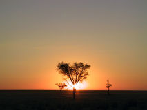Sunset. Through a tree (Namibia Stock Image