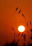 At sunset Royalty Free Stock Image