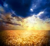 Sunset. A sunset and a wheat field Royalty Free Stock Photo
