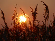 Sunset. Through the grass royalty free stock photos