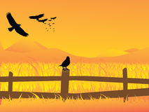At sunset. Vector illustration of sunset at some field Royalty Free Stock Photo