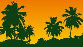 Sunset. In desert Royalty Free Stock Image
