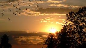 Sunset Stock Photos