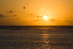 Sunset. At the bird island, Seychelles stock image