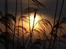 Sunset. Through the grass stock photos