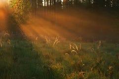 Free Sunset Stock Image - 5745891