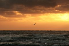 Sunset. Lone bird flying into the sunset Royalty Free Stock Photography