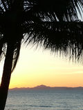 Sunset. Queensland sunset with palm tree silhouette Royalty Free Stock Photos