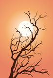 Sunset. Tree on a background sunset sky Stock Image